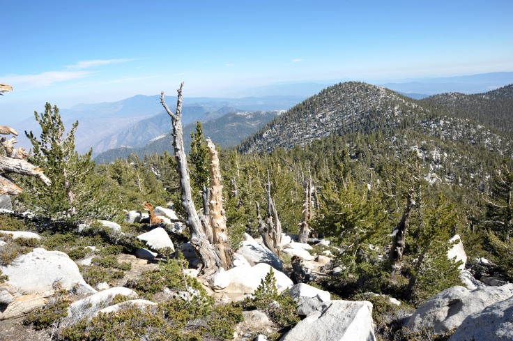 Near_the_top_of_Mount_San_Jacinto,_California